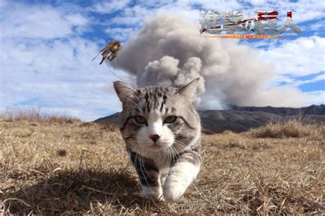 Cat walking away from explosion inspires another great