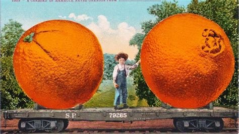 Navel orange produced a big bang in the Golden State | The