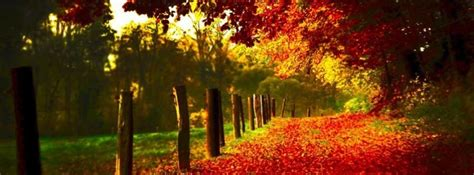 autumn Facebook Cover timeline photo banner for fb