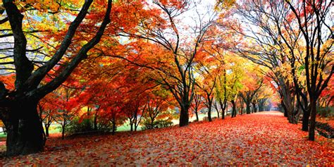 The Best Korean National Parks to Visit for Fall Foliage